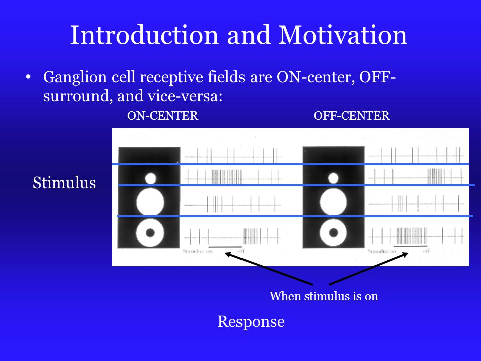 Introduction and Motivation Ganglion cell receptive fields are ON-center, OFF- surround, and vice-versa: ON-CENTEROFF-CENTER Stimulus Response When stimulus is on