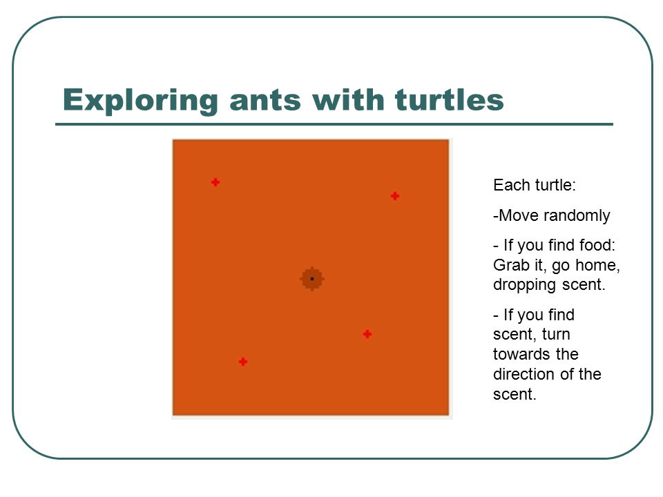 Exploring ants with turtles Each turtle: -Move randomly - If you find food: Grab it, go home, dropping scent. - If you find scent, turn towards the di