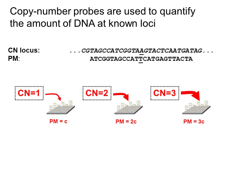 Copy-number probes are used to quantify the amount of DNA at known loci CN locus:...CGTAGCCATCGGTAAGTACTCAATGATAG...