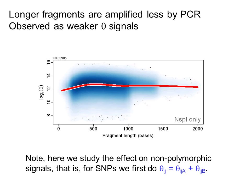 Longer fragments are amplified less by PCR Observed as weaker  signals Note, here we study the effect on non-polymorphic signals, that is, for SNPs we first do  ij =  ijA +  ijB.