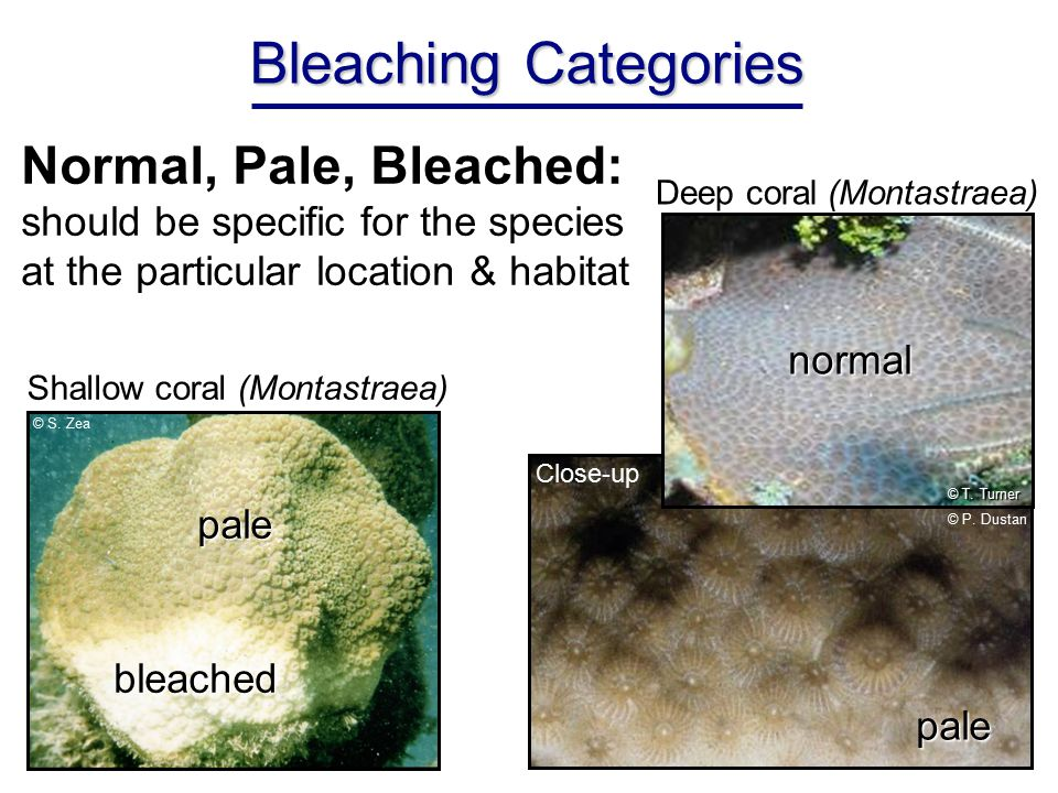 Bleaching Categories Normal, Pale, Bleached: should be specific for the species at the particular location & habitat © P.