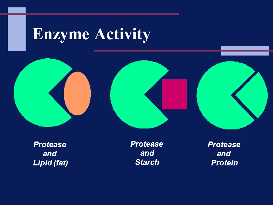 Enzyme Activity Protease and Protein Protease and Lipid (fat) Protease and Starch