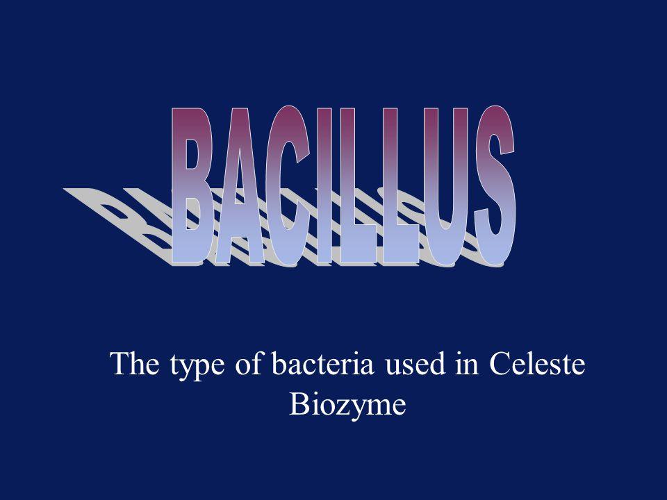 The type of bacteria used in Celeste Biozyme