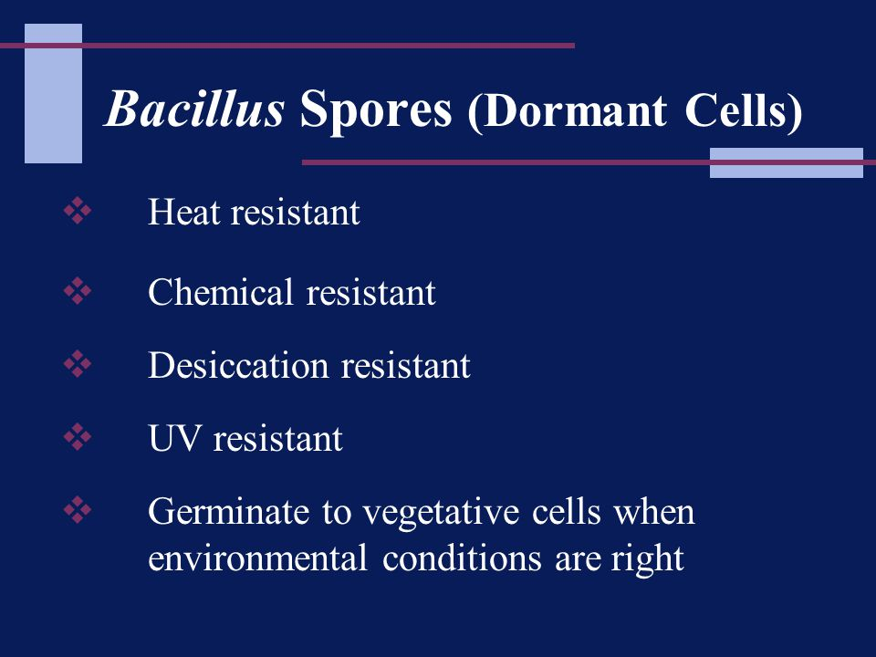 Bacillus Spores (Dormant Cells)  Heat resistant  Chemical resistant  Desiccation resistant  UV resistant  Germinate to vegetative cells when environmental conditions are right