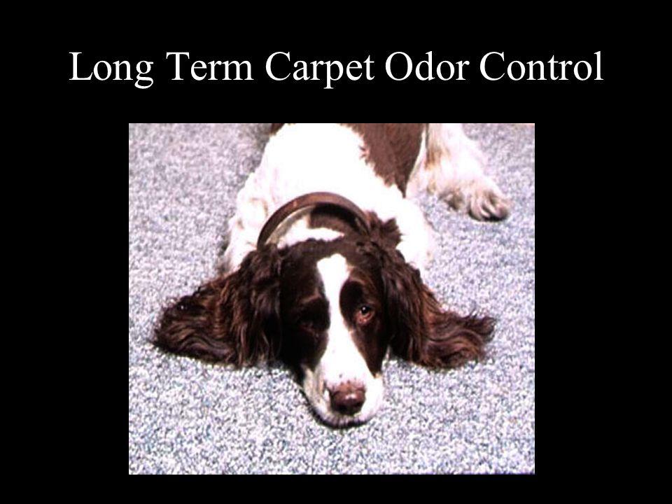 Long Term Carpet Odor Control