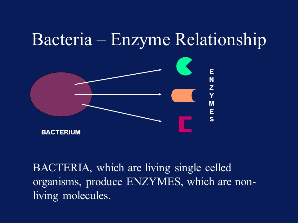 Bacteria – Enzyme Relationship BACTERIUM ENZYMESENZYMES BACTERIA, which are living single celled organisms, produce ENZYMES, which are non- living mol