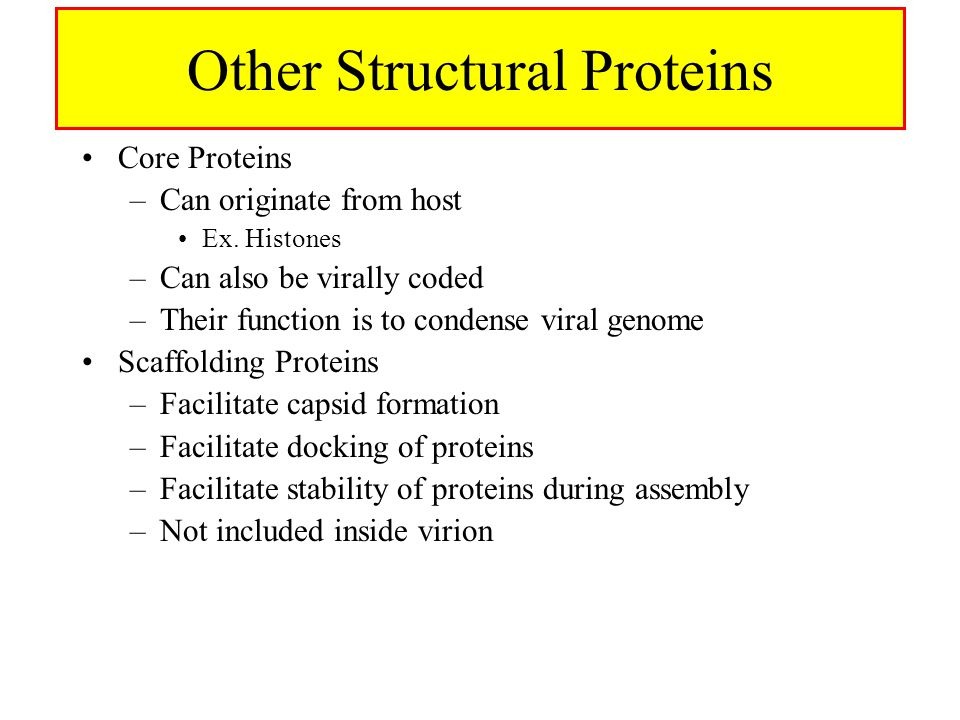 Other Structural Proteins Core Proteins –Can originate from host Ex.