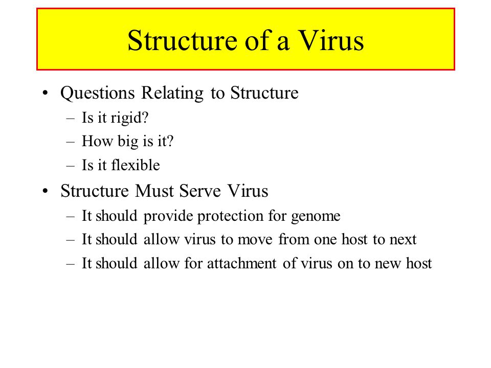 Structure of a Virus Questions Relating to Structure –Is it rigid.