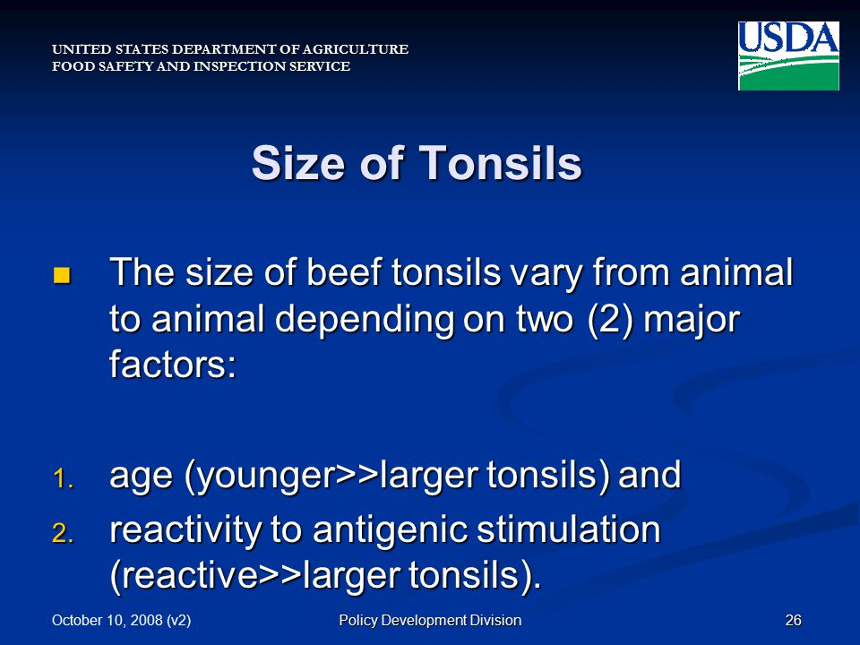 UNITED STATES DEPARTMENT OF AGRICULTURE FOOD SAFETY AND INSPECTION SERVICE October 10, 2008 (v2)26Policy Development Division Size of Tonsils The size of beef tonsils vary from animal to animal depending on two (2) major factors: The size of beef tonsils vary from animal to animal depending on two (2) major factors: 1.