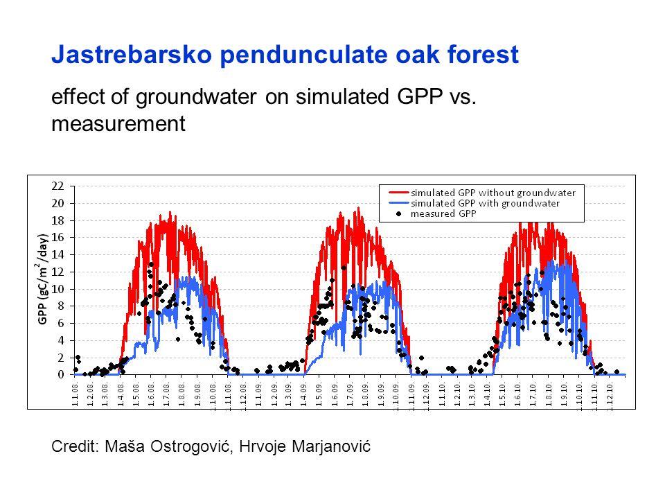 Jastrebarsko pendunculate oak forest effect of groundwater on simulated GPP vs.