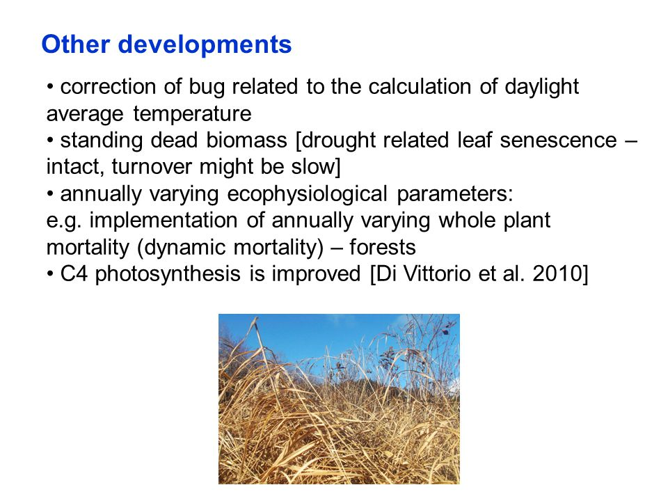 Other developments correction of bug related to the calculation of daylight average temperature standing dead biomass [drought related leaf senescence – intact, turnover might be slow] annually varying ecophysiological parameters: e.g.