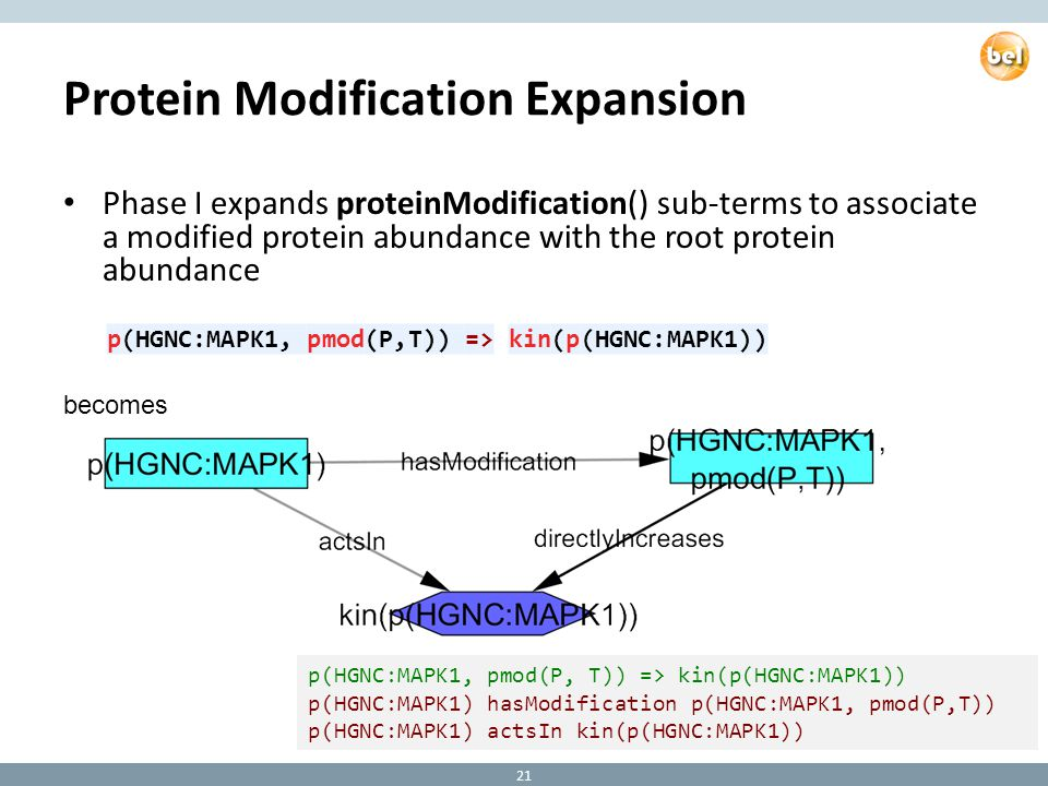 Protein Modification Expansion Phase I expands proteinModification() sub-terms to associate a modified protein abundance with the root protein abundance p(HGNC:MAPK1, pmod(P, T)) => kin(p(HGNC:MAPK1)) p(HGNC:MAPK1) hasModification p(HGNC:MAPK1, pmod(P,T)) p(HGNC:MAPK1) actsIn kin(p(HGNC:MAPK1)) becomes 21 p(HGNC:MAPK1, pmod(P,T)) => kin(p(HGNC:MAPK1))