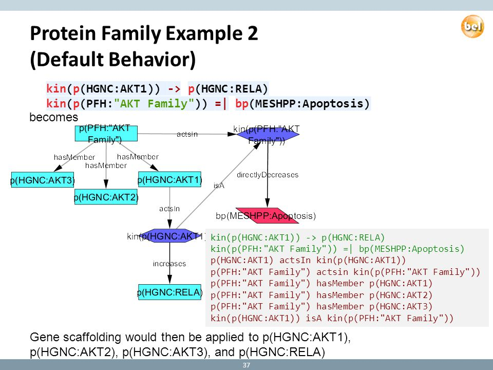 Protein Family Example 2 (Default Behavior) becomes kin(p(HGNC:AKT1)) -> p(HGNC:RELA) kin(p(PFH: