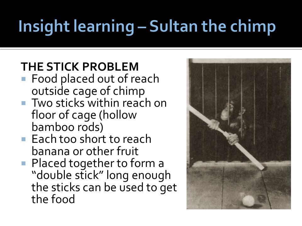 THE STICK PROBLEM  Food placed out of reach outside cage of chimp  Two sticks within reach on floor of cage (hollow bamboo rods)  Each too short to