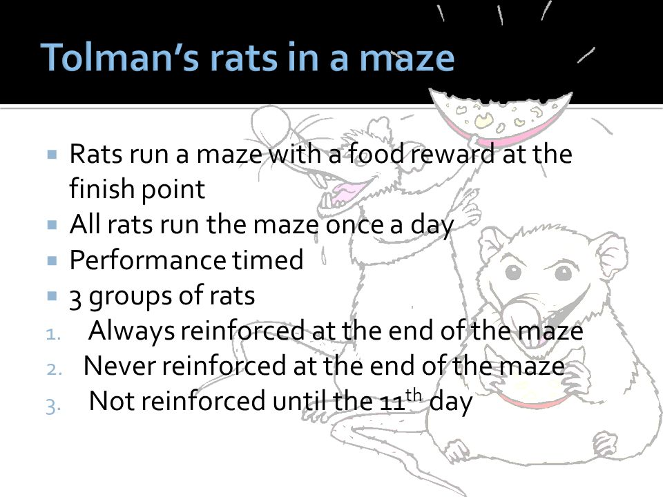  Rats run a maze with a food reward at the finish point  All rats run the maze once a day  Performance timed  3 groups of rats 1.