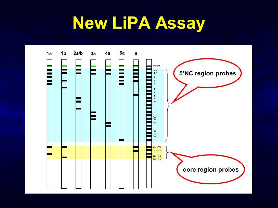 New LiPA Assay 3 18 17 15 19 20 21 23. AC Marker CC CC AC AC 4 8 7 5 6 9 10 11 12 13 14 25. 1 a 26. 1 b 24. 6 c-l 16 2a/b 3a 4a 6a 1b 61a 5'NC region