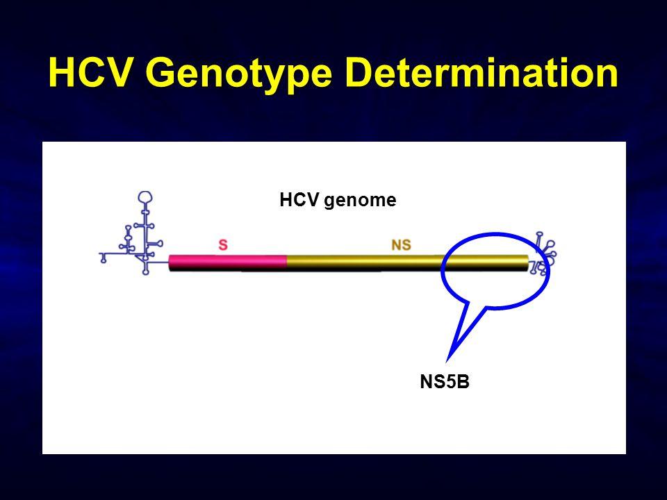 HCV Genotype Determination HCV genome NS5B