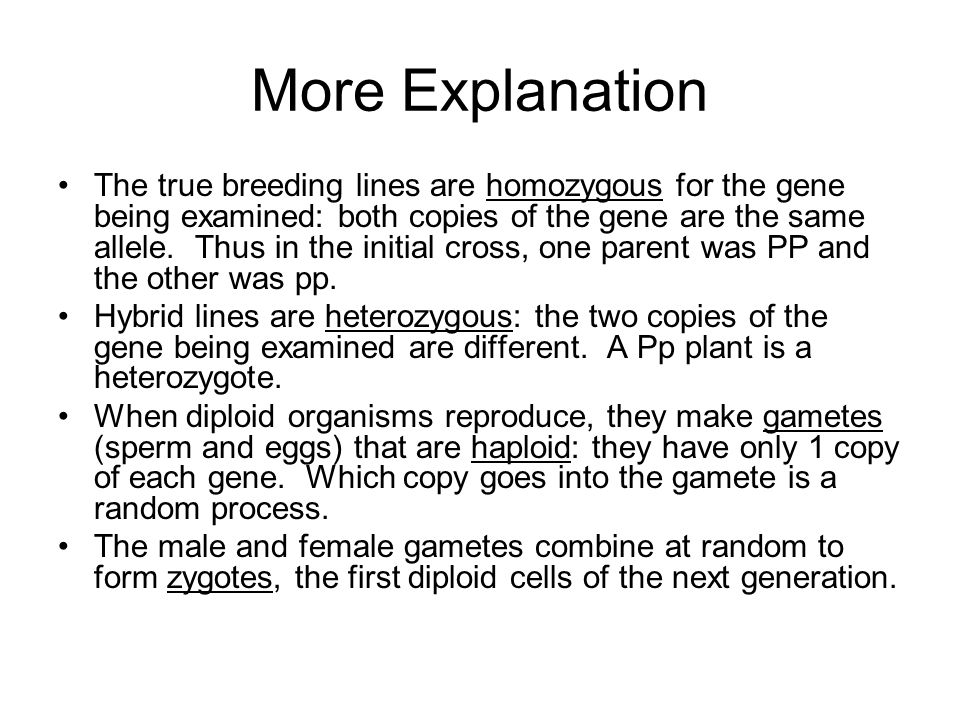 More Explanation The true breeding lines are homozygous for the gene being examined: both copies of the gene are the same allele.
