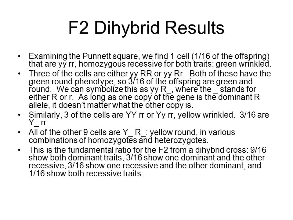 F2 Dihybrid Results Examining the Punnett square, we find 1 cell (1/16 of the offspring) that are yy rr, homozygous recessive for both traits: green wrinkled.