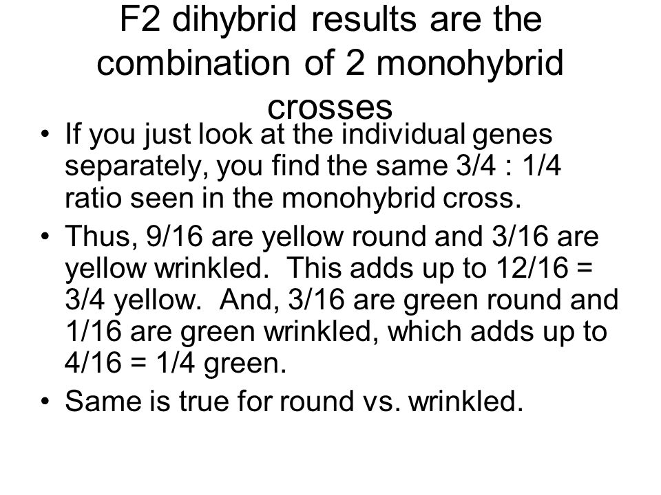 F2 dihybrid results are the combination of 2 monohybrid crosses If you just look at the individual genes separately, you find the same 3/4 : 1/4 ratio seen in the monohybrid cross.