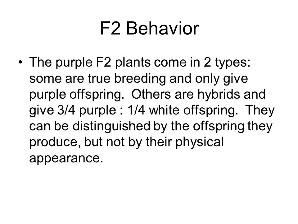 F2 Behavior The purple F2 plants come in 2 types: some are true breeding and only give purple offspring.