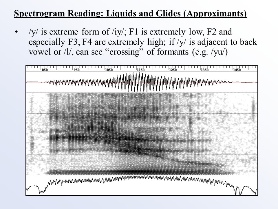 Spectrogram Reading: Liquids and Glides (Approximants) /l/ has low F1 and F2, very high F3 (opposite of /r/); energy in higher frequencies often noticeable Post-vocalic /l/ often not fully articulated; seen in dropping of F1 and F2 and rise in F3, with gradual decrease in overall energy F1=500 F2=1000 F3=3000 NOTE: /uh/ has average F1=450, F2=1030, F3=2380