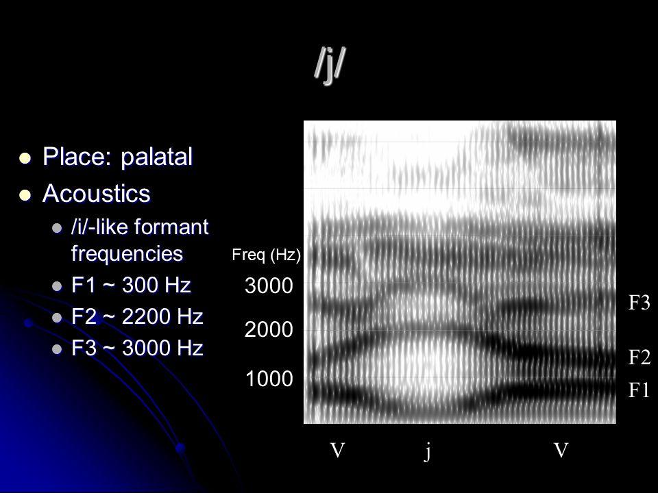 /w/ Place: labial Place: labial Acoustics Acoustics /u/-like formant frequencies /u/-like formant frequencies Constriction  formant values Constriction  formant values F1 ~ 330 Hz F1 ~ 330 Hz F2 ~ 730 Hz F2 ~ 730 Hz weak F3 weak F3 (~ 2300 Hz) V w V F1 F2 F3 1000 2000 3000 Freq (Hz)