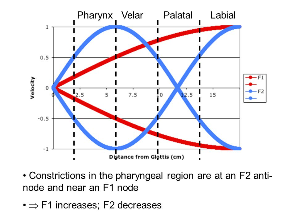 Labial Constrictions in the velar region are at an F2 anti-node and near an F1 anti-node  F1 decreases; F2 decreases PalatalVelar