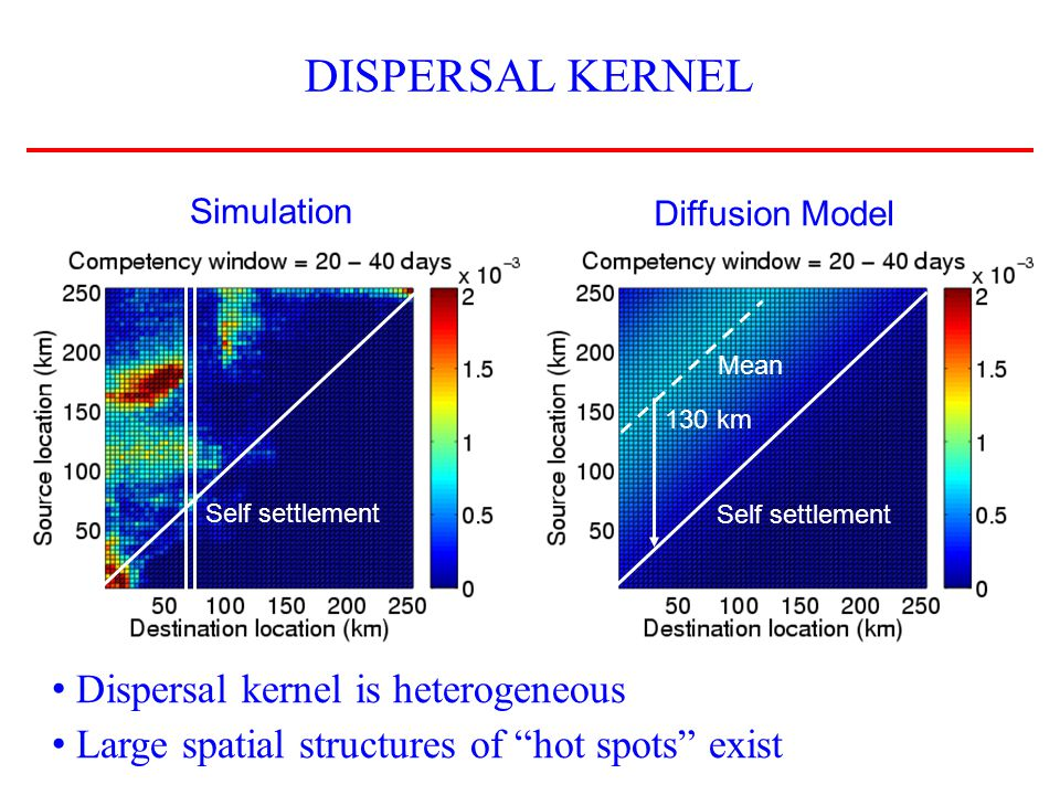 DISPERSAL KERNEL Simulation Diffusion Model Dispersal kernel is heterogeneous Large spatial structures of hot spots exist Self settlement Mean 130 km