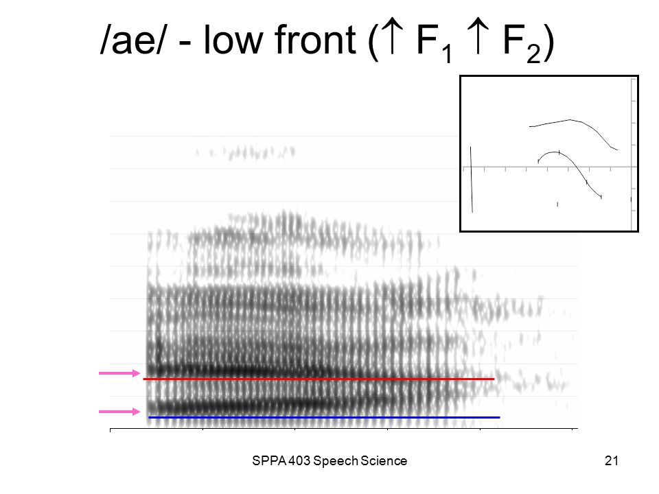 SPPA 403 Speech Science20 /u/ - high back (  F 1  F 2 )