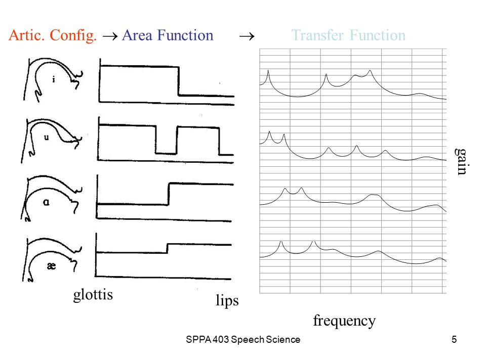 SPPA 403 Speech Science4 Source-Filter Theory: Modeling Vowels Mobile articulators serve to change the VT area function so that it is not constant non-constant area function  complexity for determining VT transfer function However, VT transfer function still based on tube acoustics