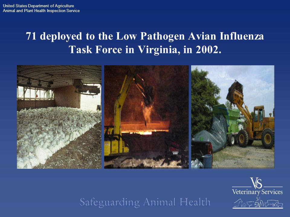 United States Department of Agriculture Animal and Plant Health Inspection Service 71 deployed to the Low Pathogen Avian Influenza Task Force in Virginia, in 2002.