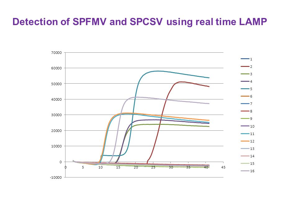 Detection of SPFMV and SPCSV using real time LAMP