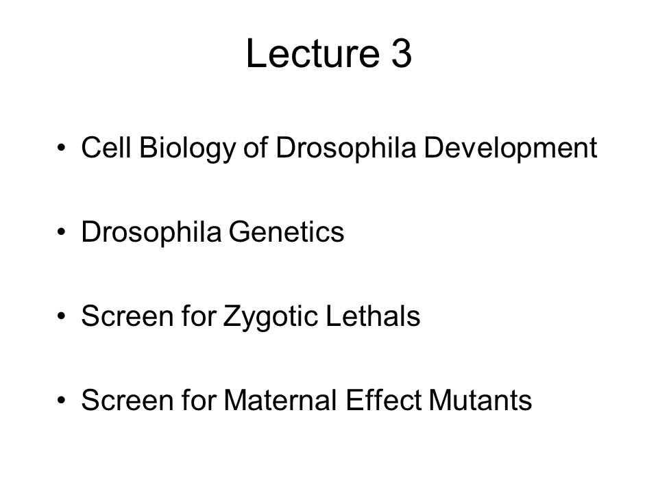Lecture 3 Cell Biology of Drosophila Development Drosophila Genetics Screen for Zygotic Lethals Screen for Maternal Effect Mutants