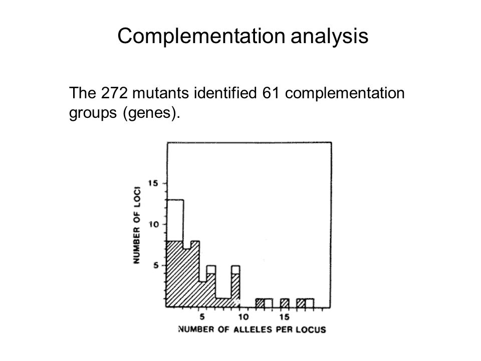Complementation analysis The 272 mutants identified 61 complementation groups (genes).