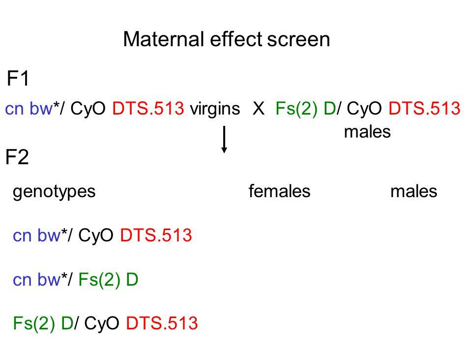 Maternal effect screen F1 cn bw*/ CyO DTS.513 virgins X Fs(2) D/ CyO DTS.513 males genotypes females males cn bw*/ CyO DTS.513 cn bw*/ Fs(2) D Fs(2) D/ CyO DTS.513 F2