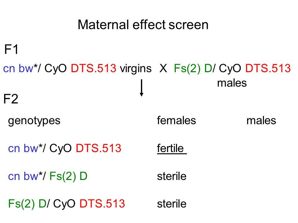 Maternal effect screen F1 cn bw*/ CyO DTS.513 virgins X Fs(2) D/ CyO DTS.513 males genotypes females males cn bw*/ CyO DTS.513fertile cn bw*/ Fs(2) Dsterile Fs(2) D/ CyO DTS.513sterile F2