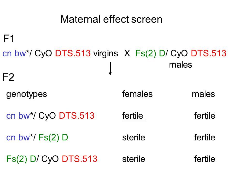 Maternal effect screen F1 cn bw*/ CyO DTS.513 virgins X Fs(2) D/ CyO DTS.513 males genotypes females males cn bw*/ CyO DTS.513fertile fertile cn bw*/ Fs(2) Dsterile fertile Fs(2) D/ CyO DTS.513sterile fertile F2