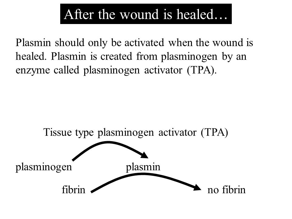 After the wound is healed … plasminogen Plasmin should only be activated when the wound is healed.