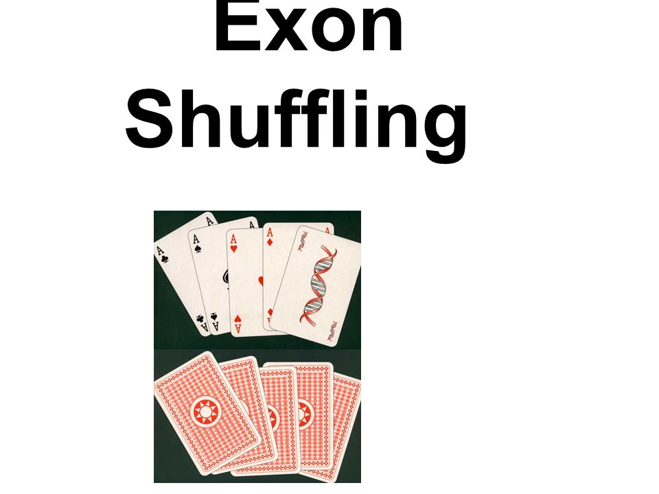 3 types of exon shuffling exon duplication = the duplication of one or more exons within a gene (internal duplication) exon insertion = exchange of domains between genes or insertions into a gene exon deletion = the removal of a segment from a gene.