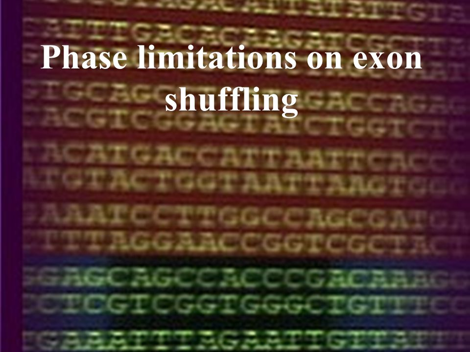 Phase limitations on exon shuffling