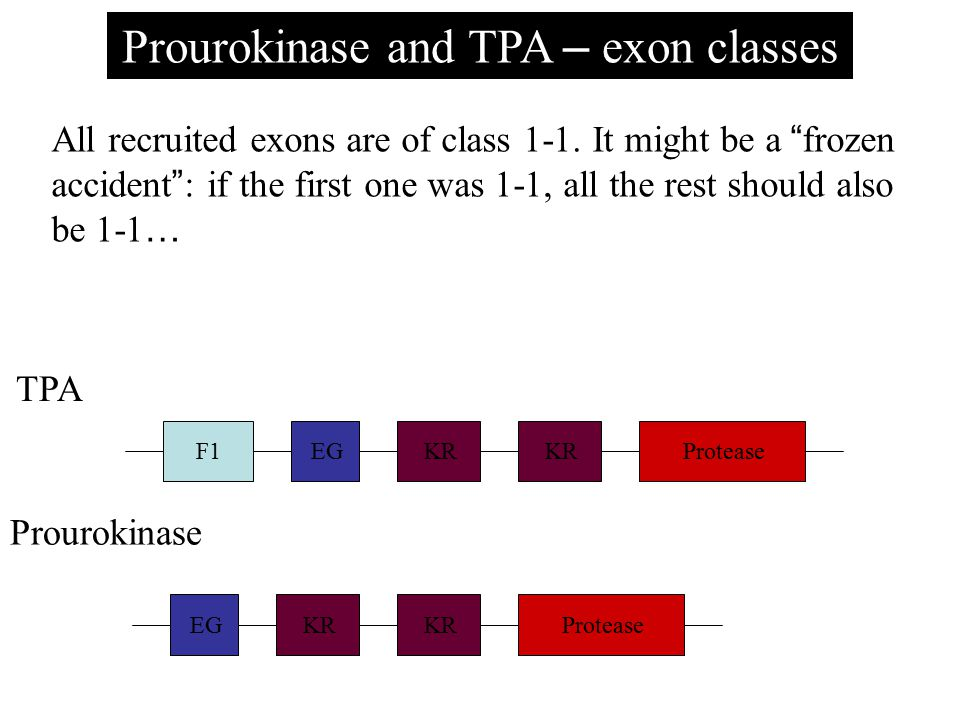 Prourokinase and TPA – exon classes All recruited exons are of class 1-1.