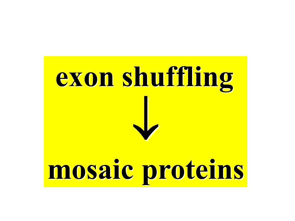 exon shuffling  mosaic proteins