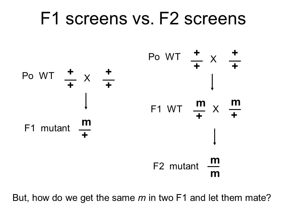 F1 screens vs.