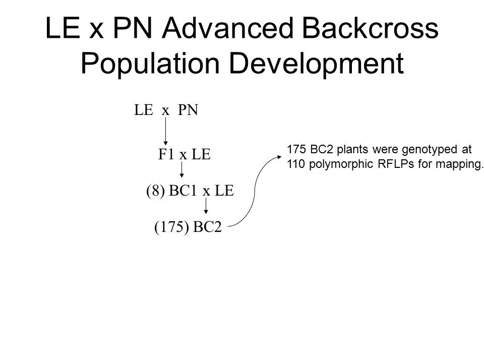 LE x PN Advanced Backcross Population Development LE x PN F1 x LE (8) BC1 x LE (175) BC2 175 BC2 plants were genotyped at 110 polymorphic RFLPs for mapping.