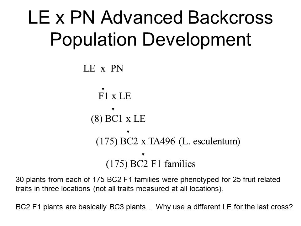 LE x PN Advanced Backcross Population Development LE x PN F1 x LE (8) BC1 x LE (175) BC2 x TA496 (L.