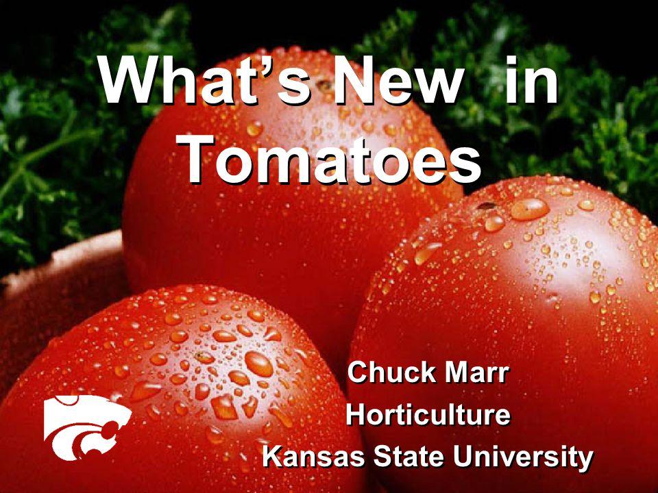 Tomato Spotted Wilt (TSW) Virus  Stunted plants, purplish color.