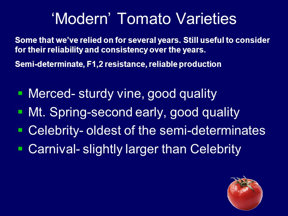 'Modern' Tomato Varieties  Merced- sturdy vine, good quality  Mt.
