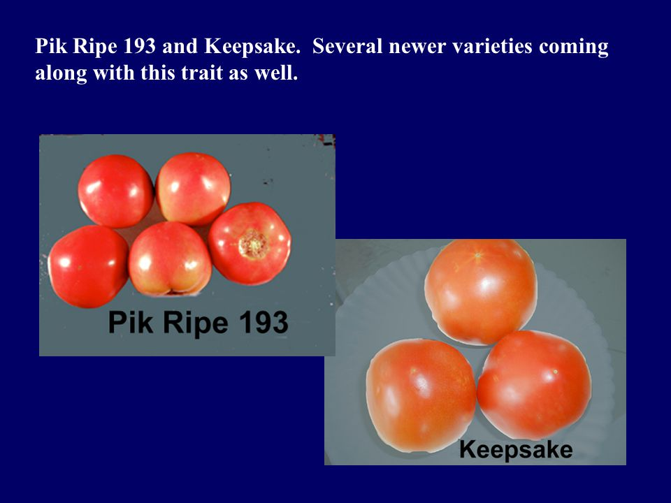 Pik Ripe 193 and Keepsake. Several newer varieties coming along with this trait as well.