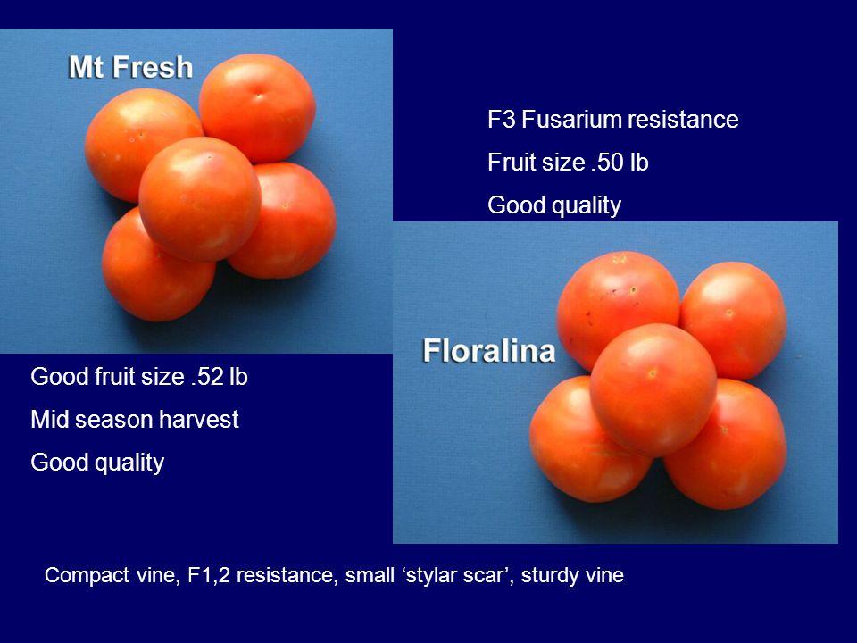 Good fruit size.52 lb Mid season harvest Good quality F3 Fusarium resistance Fruit size.50 lb Good quality Compact vine, F1,2 resistance, small 'stylar scar', sturdy vine